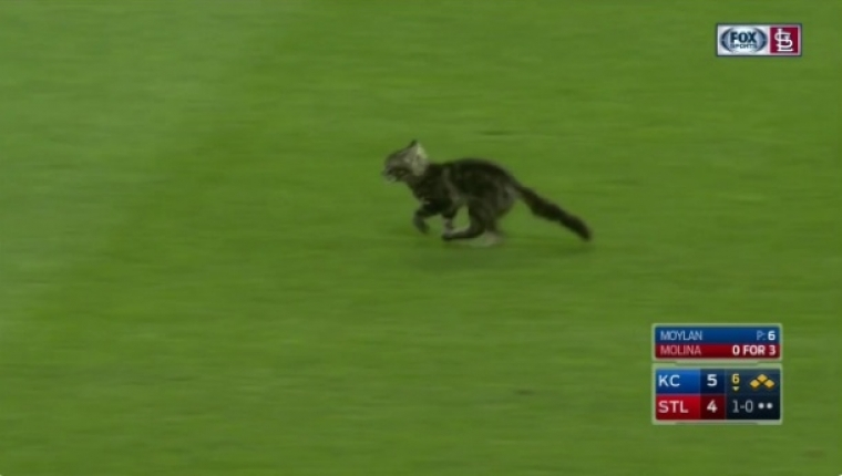 Rally cat to return to Cardinals after quarantine