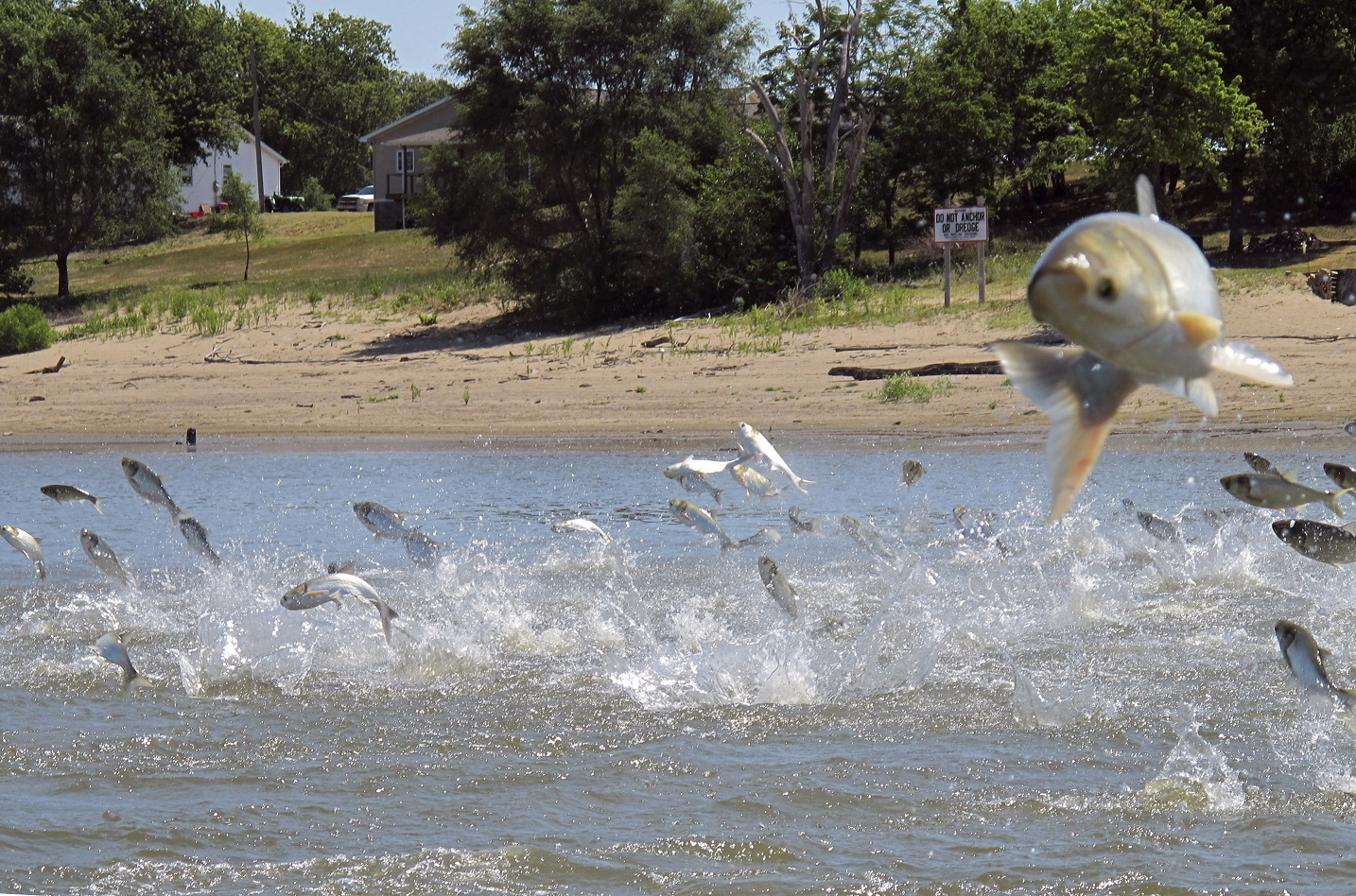Great Lakes states, provinces team up to combat invasive species