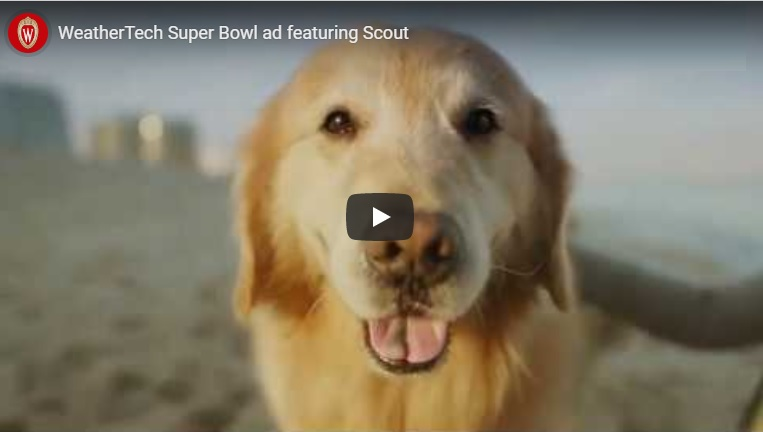 UW-Madison veterinary school featured in Super Bowl ad