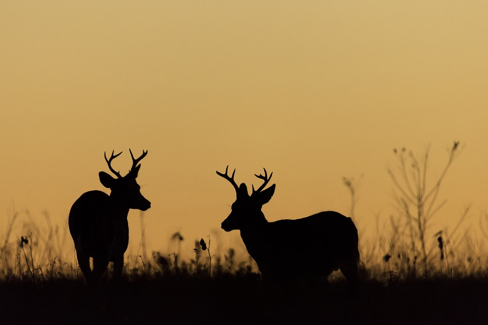 DNR: Total 2019 Wisconsin deer kill down 14%